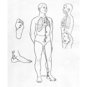 17 tipů jak posílit ledviny